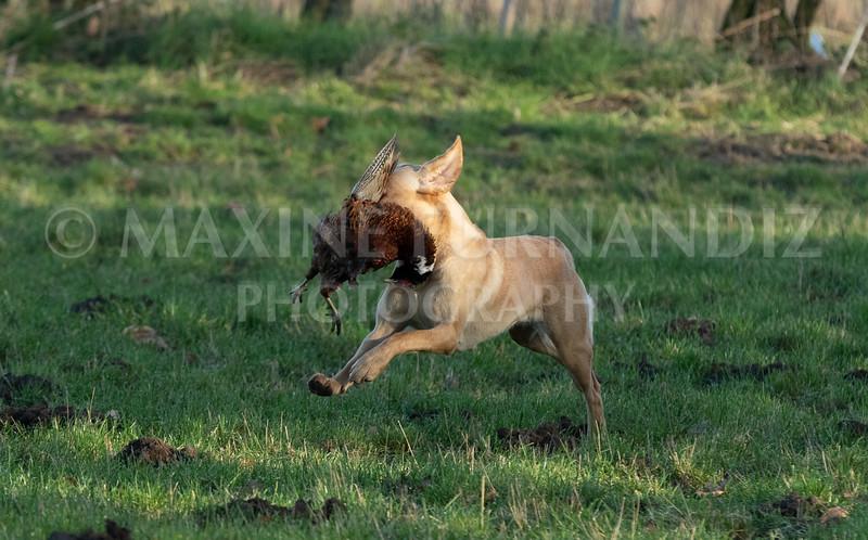 Dog Training-3995