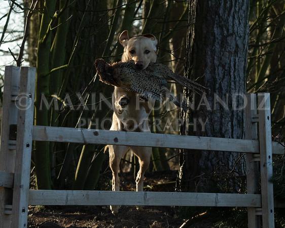 Dog Training-3963