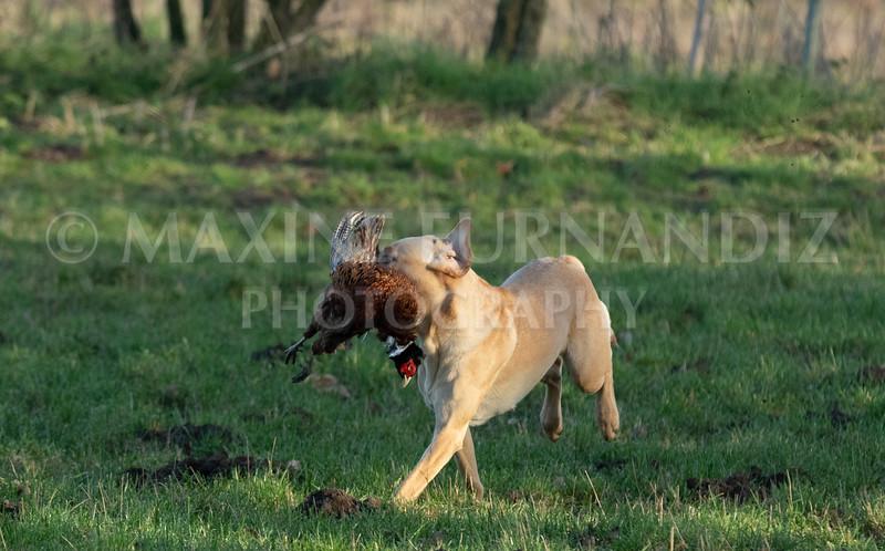 Dog Training-3996