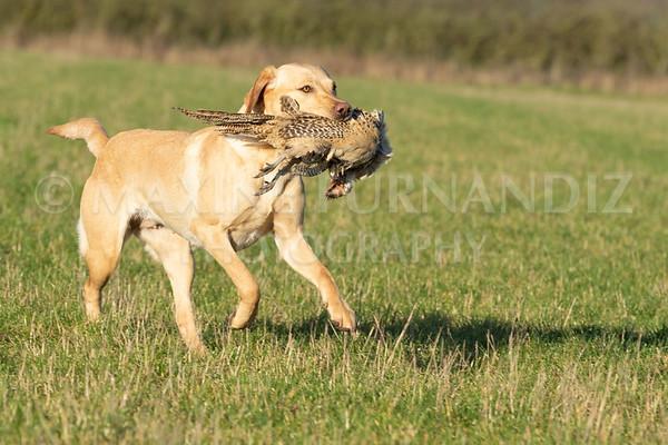 Dog Training-4216
