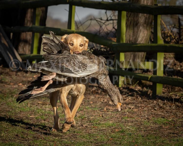 Dog Training £Feb 2019-4932