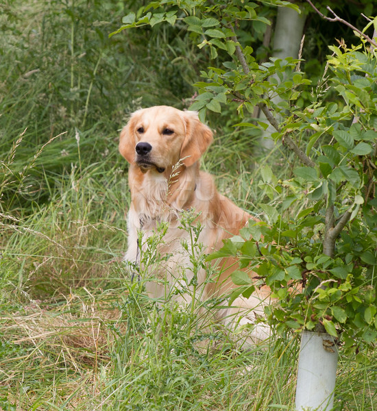 Beginners Gundog Part C-9343