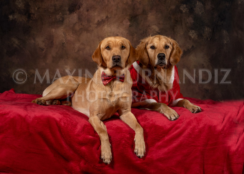 Dogs-4615-Edit