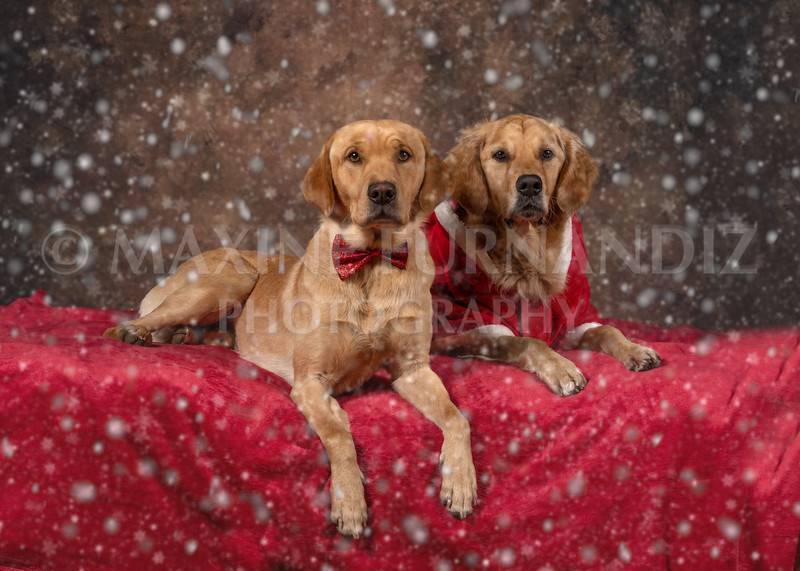Dogs-4615-Edit Snow