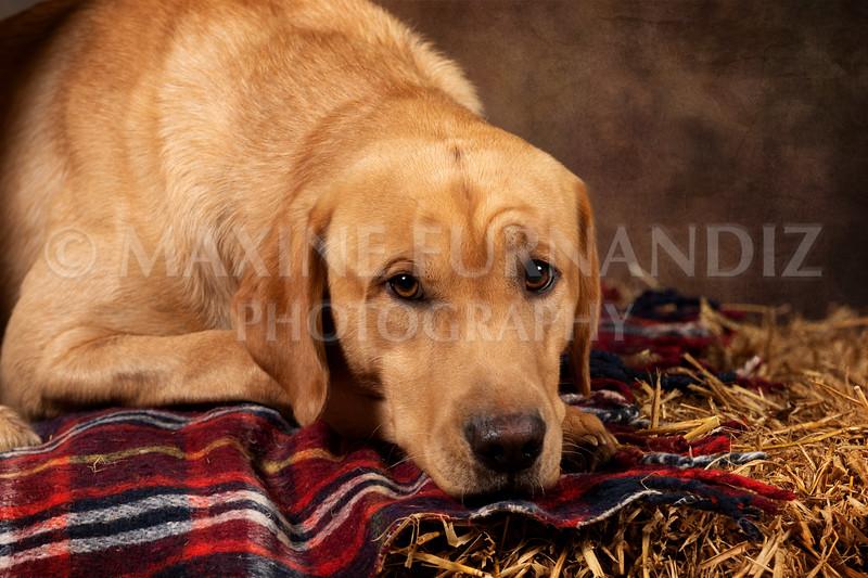 Dogs-4594-Edit