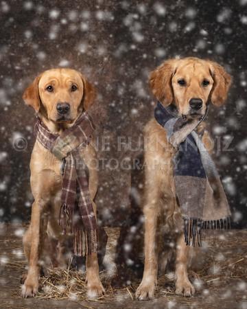 Dogs-4666-EditDrummer Barley Sat Scarf snow