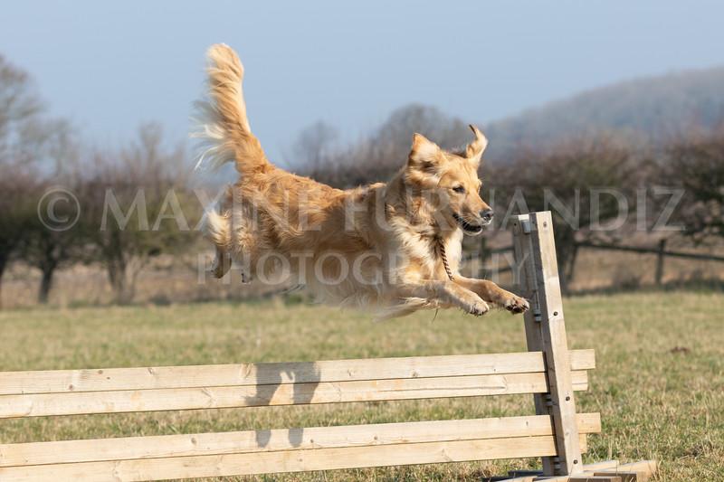Dog Training Novice GD Feb2019-5939