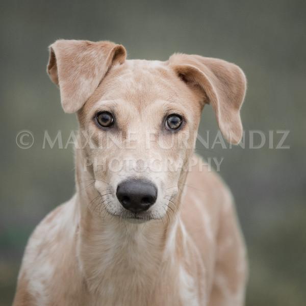 Puppy -0931