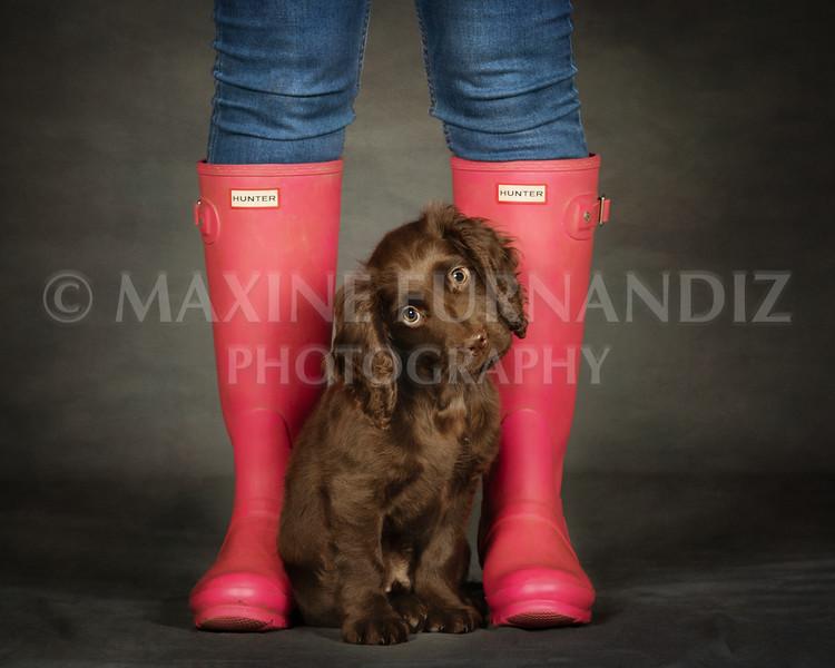 Dexter pink wellies sat head tilt Dawn Ash-0394