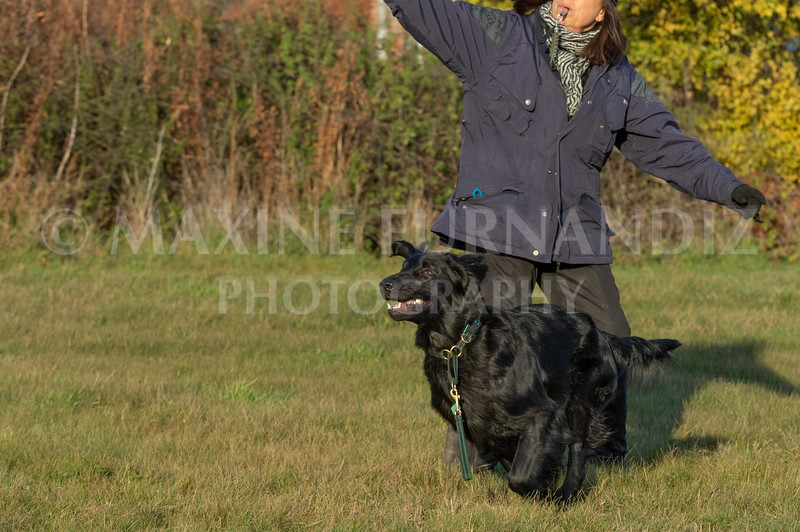 Dogs-3571