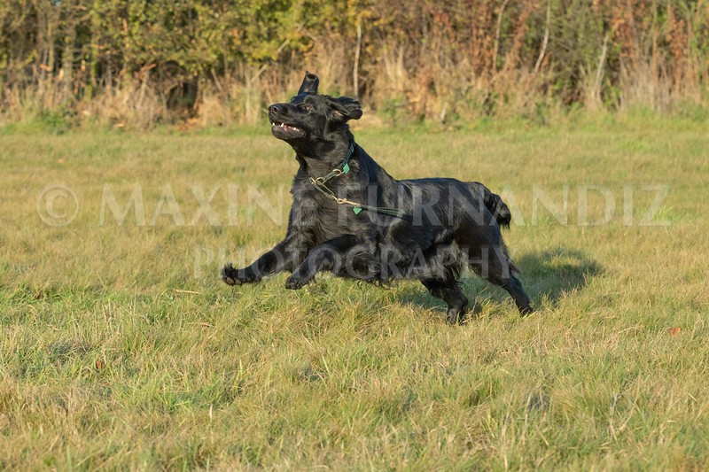 Dogs-3576