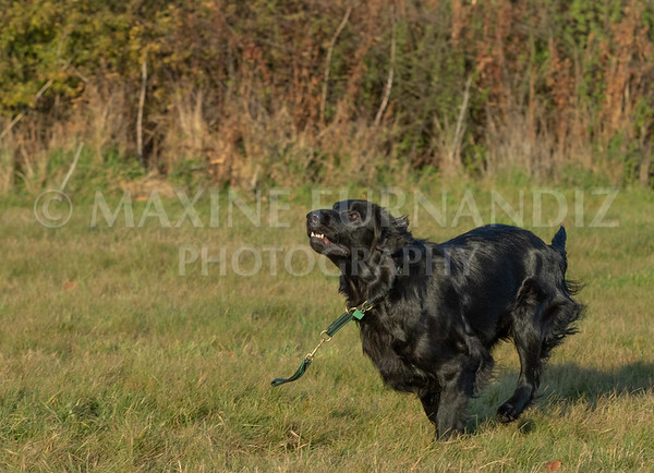 Dogs-3574