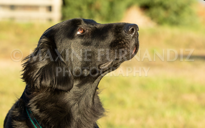 Dogs-3636