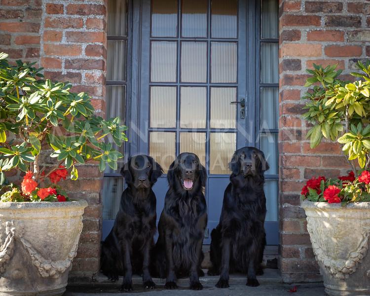 Janet Botterill Dogs-5737-Edit