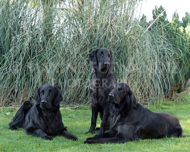 Janet Botterill Dogs-5617-Edit