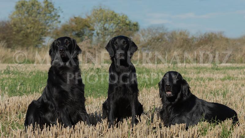 Janet Botterill Dogs-2885-Edit