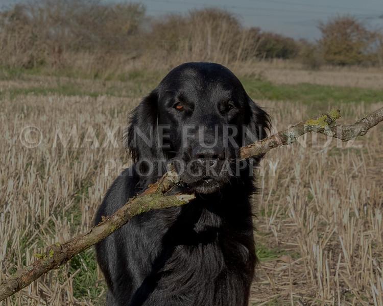 Janet Botterill Dogs-5679-Edit