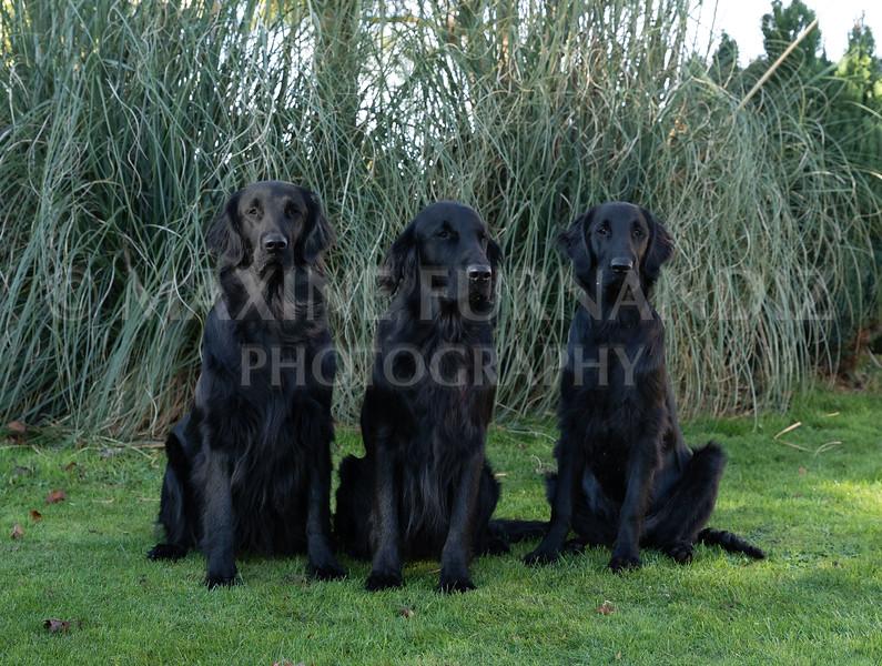 Janet Botterill Dogs-5616-Edit