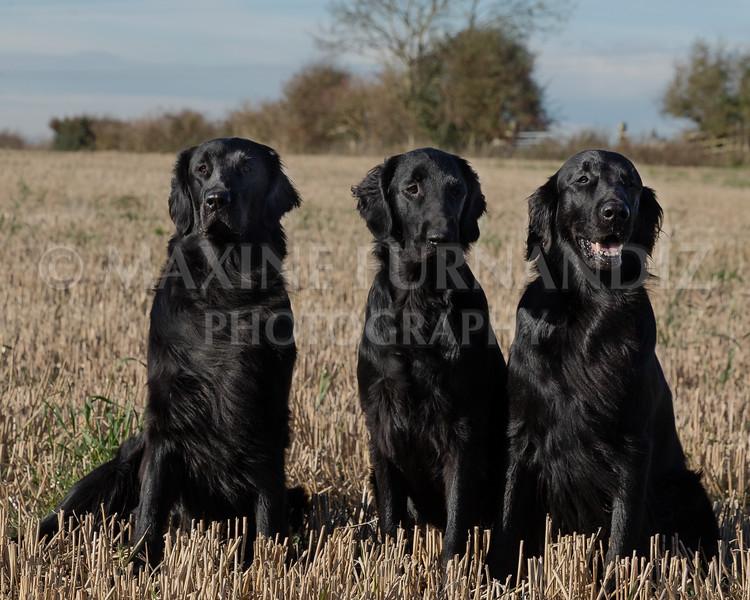 Janet Botterill Dogs-5654-Edit