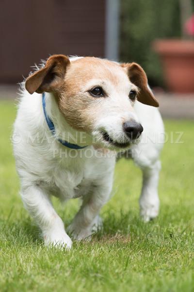 Joanne's Dogs-6468