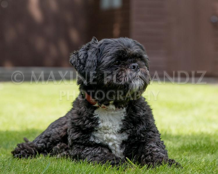 Joanne's Dogs-6574