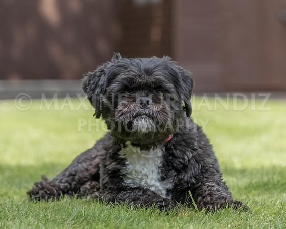 Joanne's Dogs-6578
