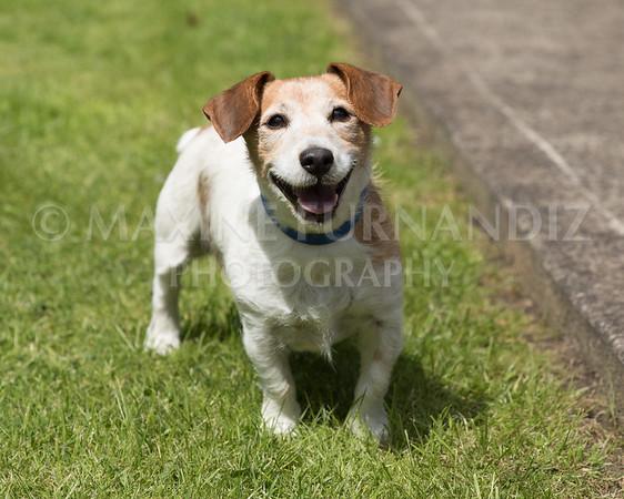 Joanne's Dogs-6531