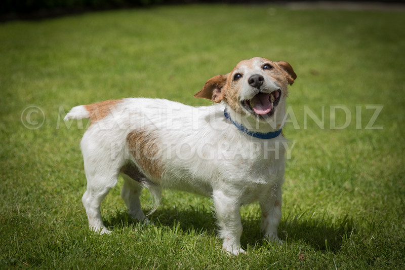 Joanne's Dogs-6485