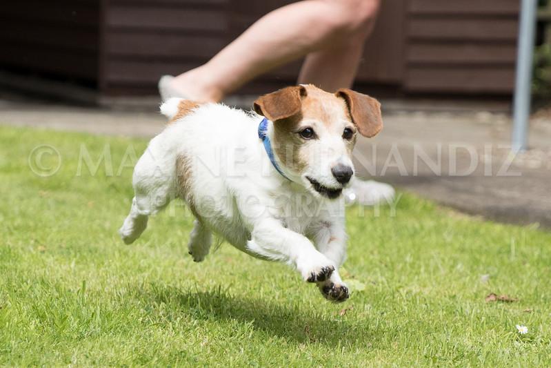 Joanne's Dogs-6442