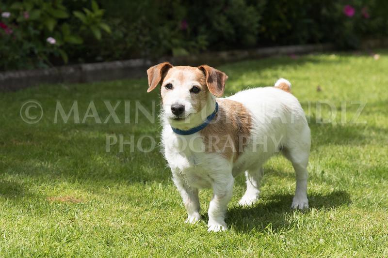 Joanne's Dogs-6541