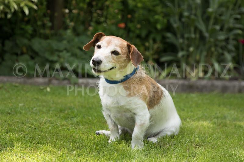 Joanne's Dogs-6505