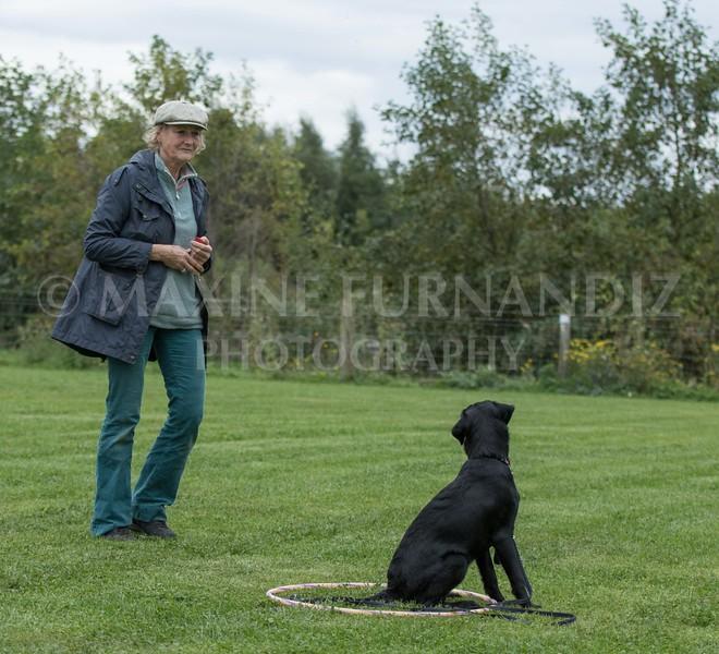 Puppy 30 Sept 2017-0254