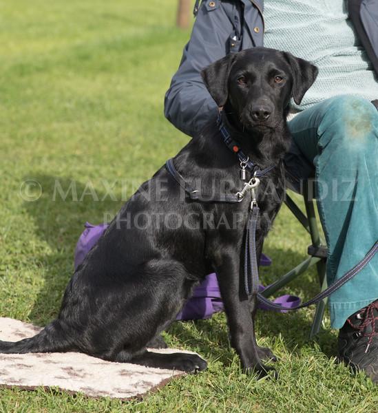 Puppy 30 Sept 2017-1101