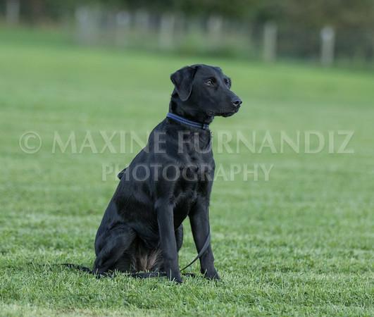 Puppy 30 Sept 2017-0088