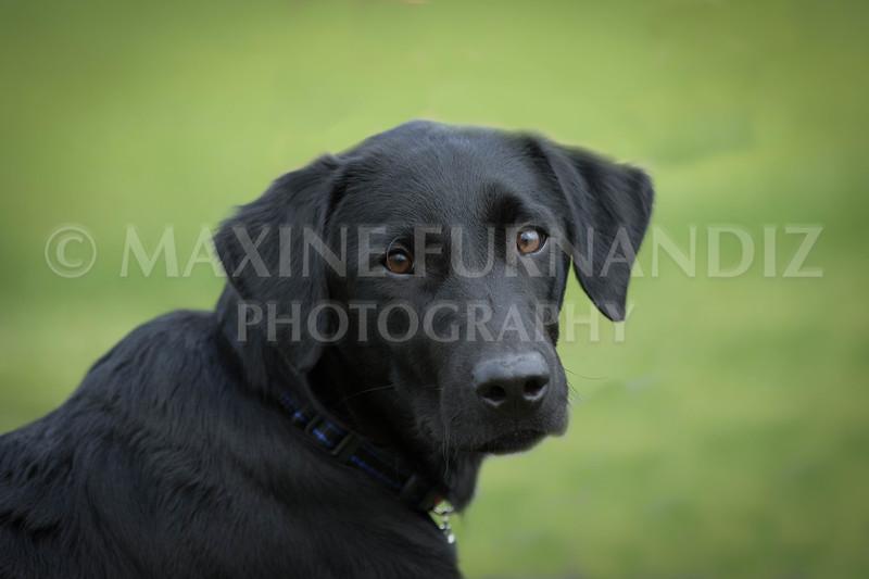 Puppy 30 Sept 2017-0218-Edit