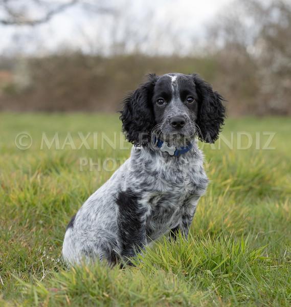 Blue Haigh Sat in field-2861