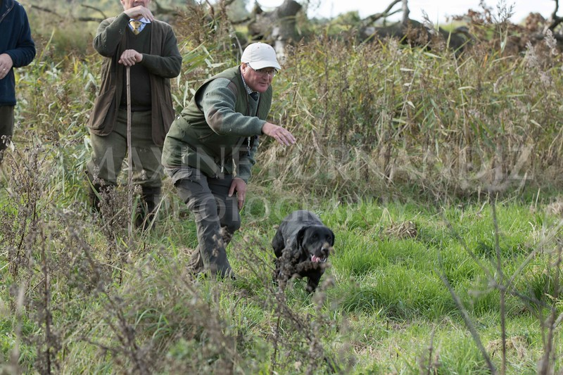 Yorkshire Gundog NoviceFT 6 Oct 2017-0623