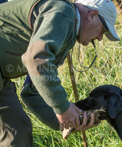 Yorkshire Gundog NoviceFT 6 Oct 2017-0360
