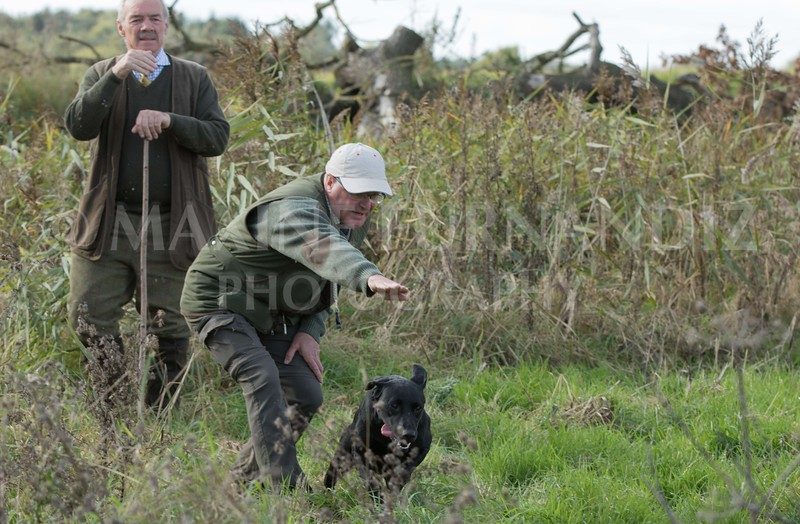 Yorkshire Gundog NoviceFT 6 Oct 2017-0621