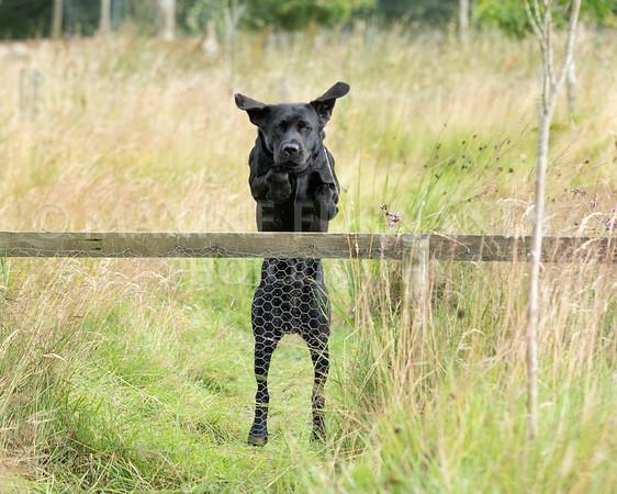 Polly Dunckleys Dogs-2680