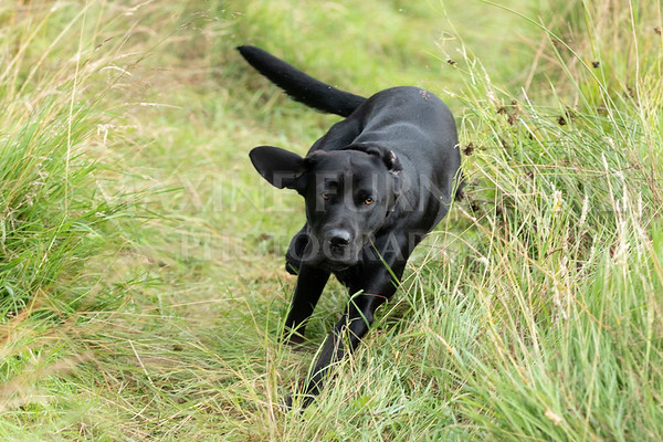 Polly Dunckleys Dogs-2687