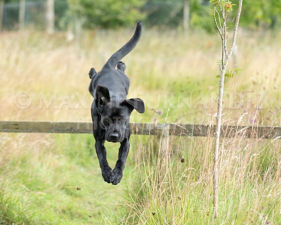 Polly Dunckleys Dogs-2683