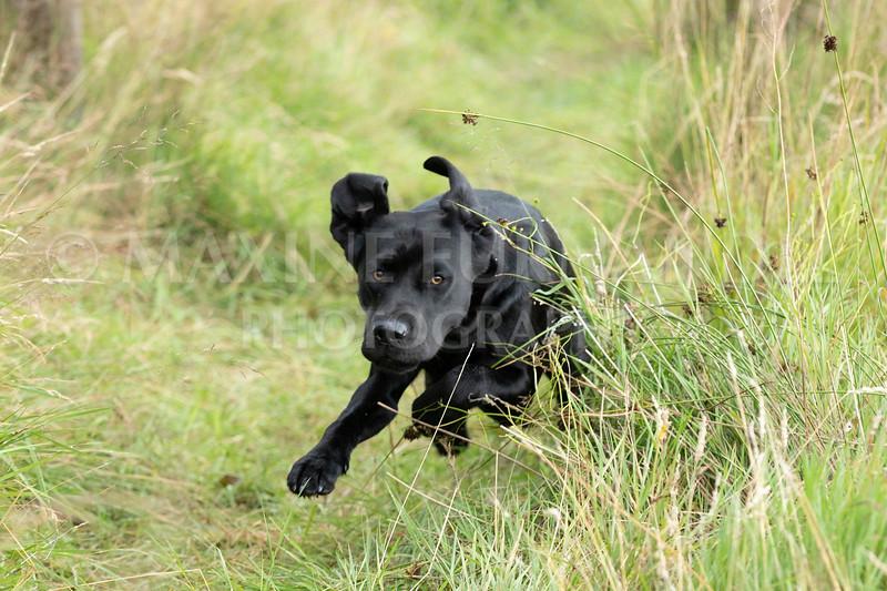 Polly Dunckleys Dogs-2686