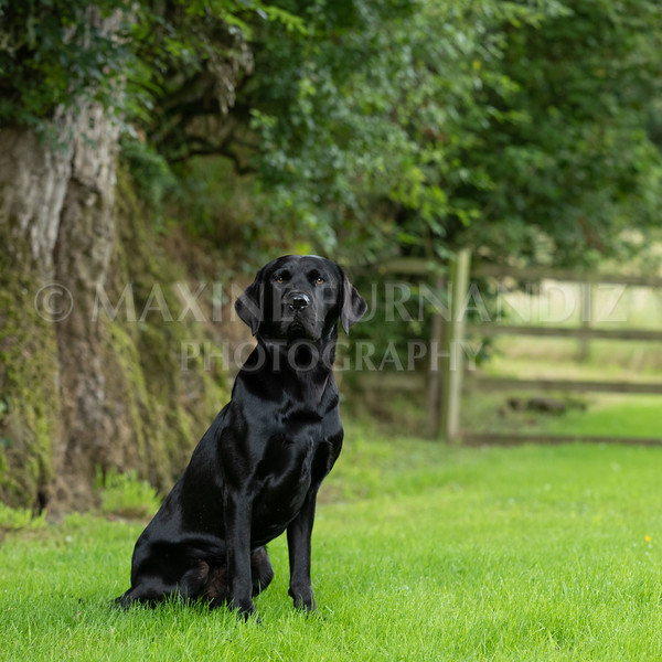 Polly Dunckleys Dogs-2661
