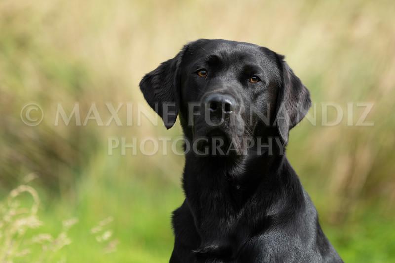 Polly Dunckleys Dogs-2675