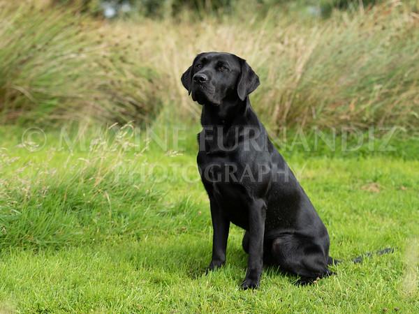 Polly Dunckleys Dogs-2673