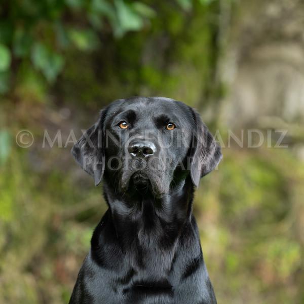 Polly Dunckleys Dogs-2653
