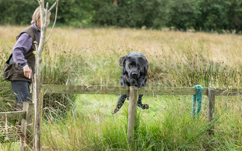 Polly Dunckleys Dogs-2689