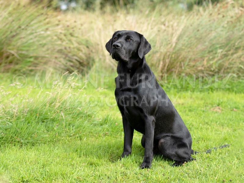 Polly Dunckleys Dogs-2673-Edit