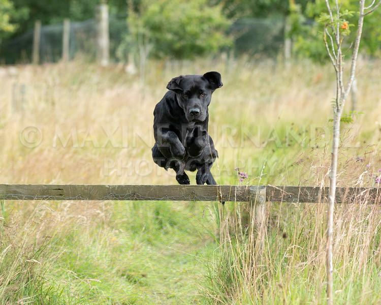 Polly Dunckleys Dogs-2681